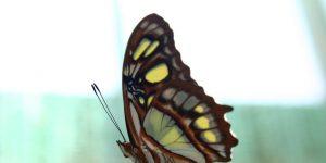 Fotó: Oldal Gergely - pillangó