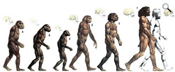 Charles Darwin evolúciós elmélete (fotó: Wikipédia)