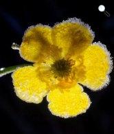 Virágon megfagyott dér Zabar közelében (MTI Fotó: Komka Péter)