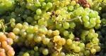 bor, szőlő, szőlőprés (Fotó: Cultura.hu)