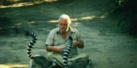 Gerald Durrell (Fotó: Youtube, Madagaszkár)