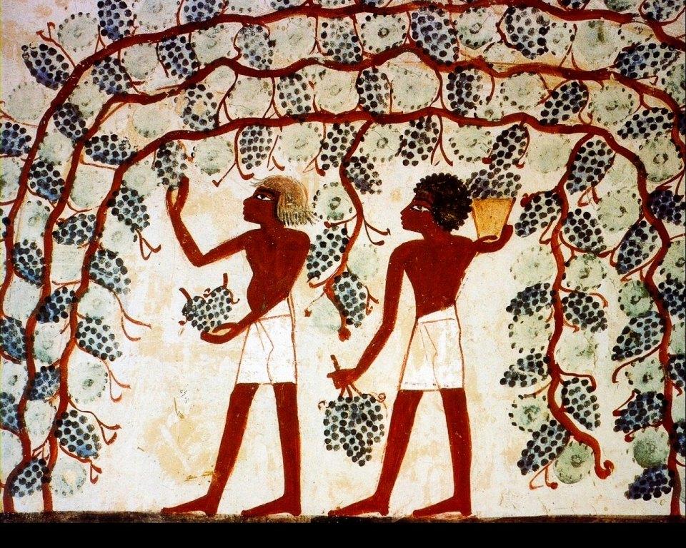 [Image: cultura-okor-egyiptom-szolo-bor.jpg]