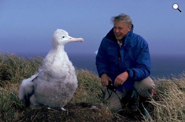 Bolygónk, a Föld - David Attenborough (Fotó: bbc.co.uk)