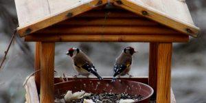 Madáretető télen tengelic madarakkal (Fotó: pixabay.com)