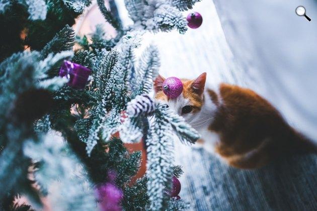 Karácsonyfa egy macskával (Fotó: pixabay.com)