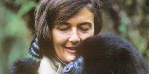 Dian Fossey (1932-1985) etológus (Fotó: biography.com)