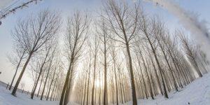 Hideg, havas idő - Nagybajom,  Somogy megye (MTI Fotó: Varga György)