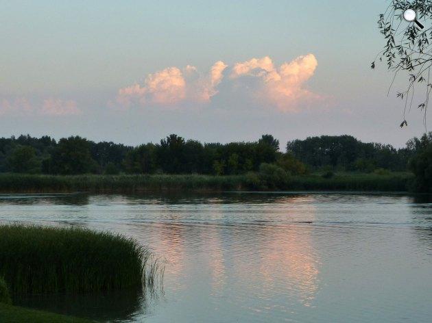 Tisza-tó, nádas (Fotó: M.D. Kinga)