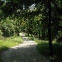 Balatonföldvári parkerdő (Fotó: SEFAG Erdészeti és Faipari Zrt.)